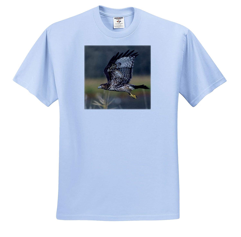 3dRose Danita Delimont Hawks Adult T-Shirt XL Red-Tail Hawk ts/_313964