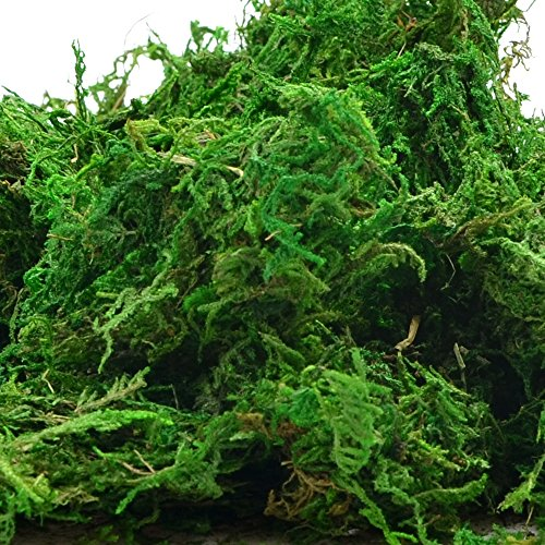Byher 92926 Preserved Forest Moss, Fresh Green, 8oz (200 cubic inch) - Preserved Grass