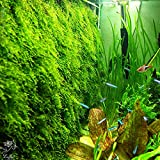 Luffy Moss wall Mesh Kit - (Plant not included) Decorate Bare Tank with Mini, Java, Flame Moss