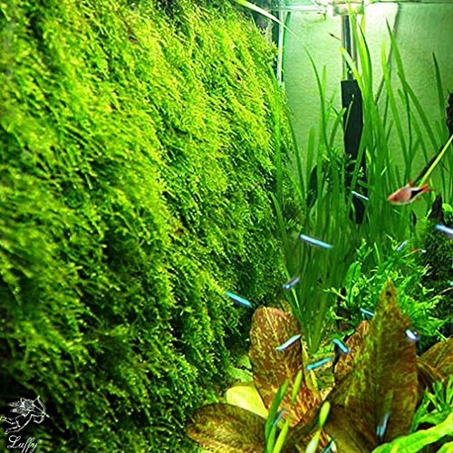 Decorative Luffy Aquatic Moss Wall/Floor Mesh Kit - Create a Lush Living Plant Moss Wall or Moss Carpet for your Fish Tank (Plant Not Included): Includes 2 Mesh pieces, 10 Cable Ties & 5 Suction Cups