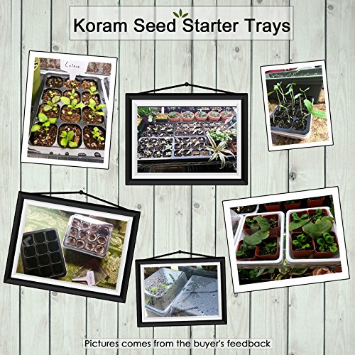 The 8 best seed starting trays with dome