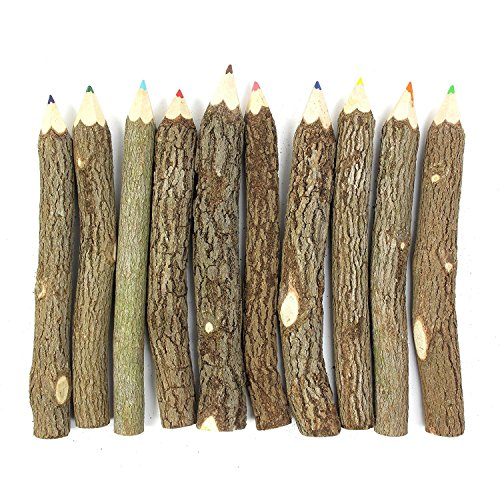 Blue Mango Branch & Twig Assorted Colored Pencils DIY Crafts Wood Pencil Holder Natural 5 inches Fits Nicely in Children and adults Hand (Diy Toga)