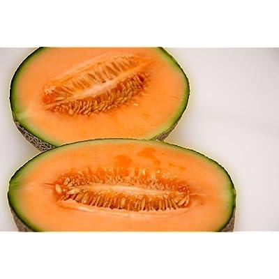 melon, IROQUOIS MUSKMELON, cantaloupe, 40 seeds : Garden & Outdoor