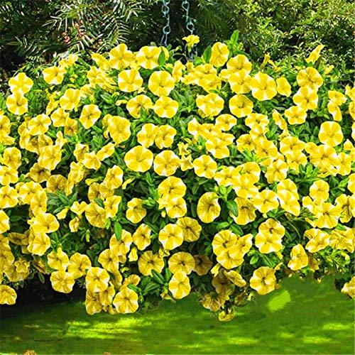 (200 pcs Seeds Hanging Petunia Mixed Bonsai Color Waves Beautiful l)