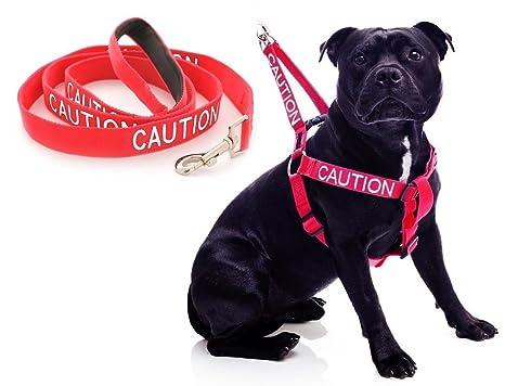 Cuidado: arnés para Perro con código de Color Rojo y Mango de ...