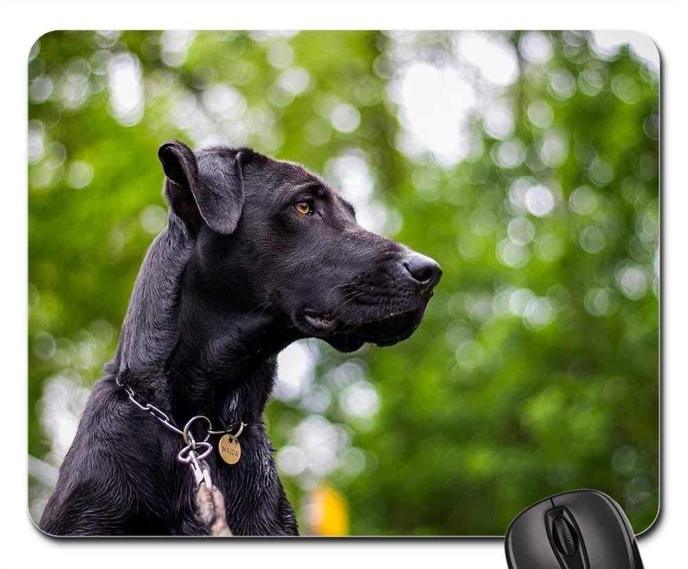 犬用マウスパッド 1122-005 300*250*3 mm B07L4WQKRD Fl25 260*210*3 mm 260*210*3 mm|Fl25