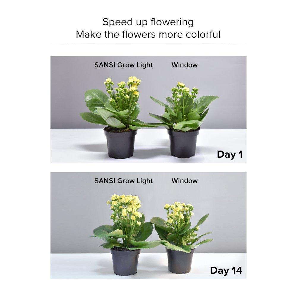 SANSI Flowering LED Grow Light Bulb, Ceramic Plant Light, HydroponiGrowing Light Bulbscs, Indoor Farming, Greenhouses (15w, E26 Socket, 16 LED Chips) by SANSI (Image #6)