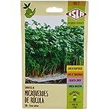 Semente Isla Microverdes Rúcula Folha Larga 586