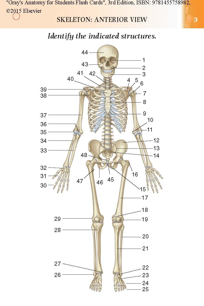 Gray\'s Anatomy for Students Flash Cards: With Student Consult Online ...