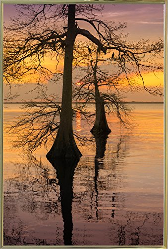 "Frame USA Two Trees on Water Framed Print 36.0""x24.0"" by Moi"