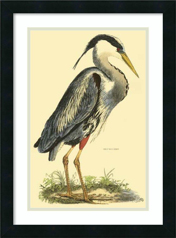 Framed Art Print 'Great Blue Heron' by Prideaux John Selby