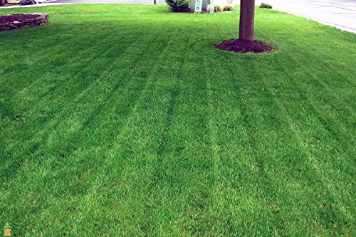 Lesco Double Eagle Rye Grass Seed 50 lb Bag Bulk by The Planting Tree (Image #1)