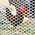 Ecover Poultry Fence Plastic Rabbit Fencing Poultry Netting Chicken Net for Chicken/Racoons/Gophor/Snakes, 6 x 25ft, White