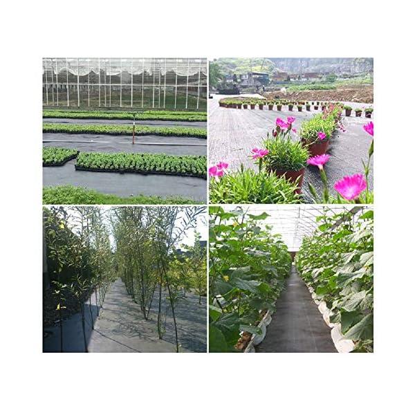 Piantagione di piante per il controllo delle erbacce - Barriera erbaccia per copertura suolo - Ecologica per il… 6 spesavip