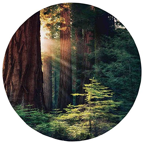 Round Rug Mat Carpet,National Parks Home Decor,Morning Sunlight in Wilderness Yosemite Sierra Nevada Nature Art,Green Brown,Flannel Microfiber Non-slip Soft Absorbent,for Kitchen Floor Bathroom (Flannel Sierra)