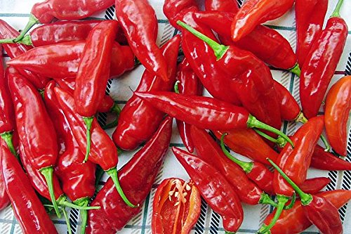 30+ ORGANICALLY GROWN Thai Red Super Hot Pepper Seeds Heirloom NON-GMO Capsicum annuum, Chili, Spicy, Rich Flavor, Productive, From USA