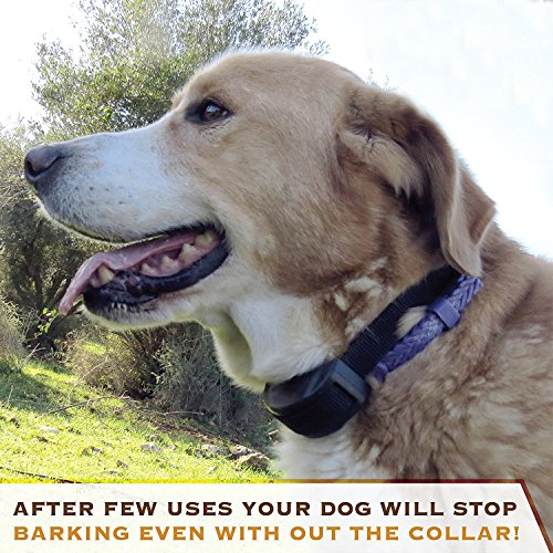 Aolun No Bark Shock Dog Collar With 7 Sensitivity Levels