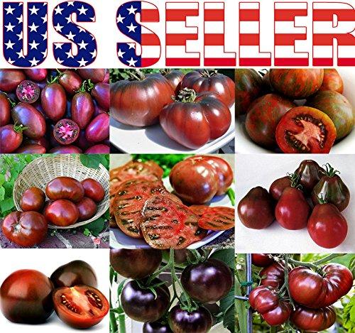 Plantree 30+ Semillas - Semillas de Tomate Negro: 30+ Semillas de Tomate Negro Cultivadas Orgà ¡ nicamente Mezcla 9 Variedades Heirloom Non-Gmo Usa! Generic