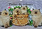 Pattes De Velours 2017: Seance Photos De Chatons (Calvendo Animaux) (French Edition)