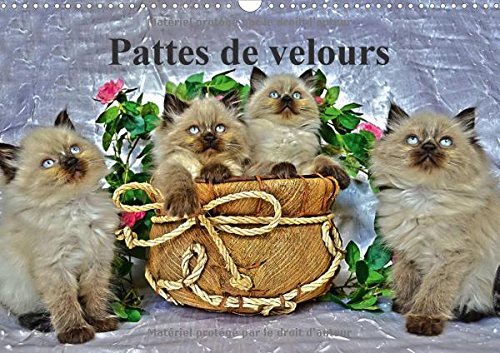 Pattes De Velours 2017: Seance Photos De Chatons (Calvendo Animaux) (French Edition) by Calvendo Verlag GmbH