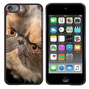 TECHCASE---Cubierta de la caja de protección para la piel dura ** Apple iPod Touch 6 6th Touch6 ** --Persa de pelo corto hocico corto del gato