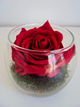 Composition Florale Rose Eternelle Rouge Vase Boule Fleur Naturelle