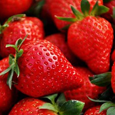 Almost Seeds- 100 pcs/Bag Giant Strawberry Seeds Home Garden Plant Seeds Fruits Home Garden Rarities Bonsai Potted Plant Seeds : Garden & Outdoor