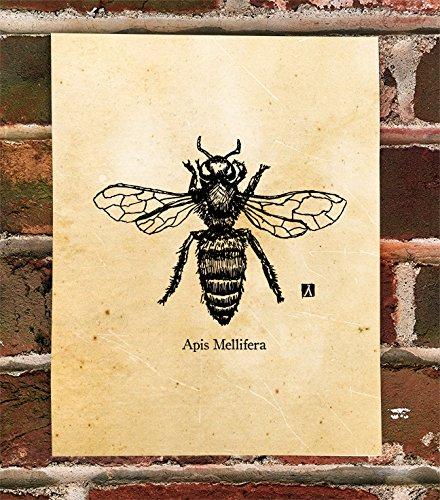 KillerBeeMoto: Honey Bee Apis Mellifera Pen Sketch Print ()