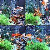 Awpeye 4 Pcs Aquarium Fish Net, 4 Inch Quick