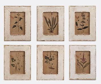 napa home garden framed botanical prints