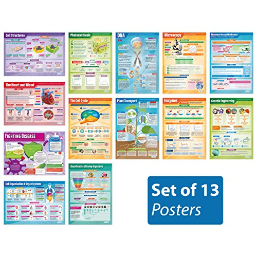 Biology Posters - Set of 13 | Science Posters | Laminated Gloss Paper Measuring 33