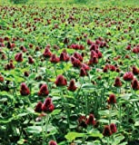 David's Garden Seeds Cover Crop Crimson Clover SV982 (Red) Organic One Ounce Package