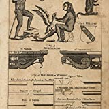 Ape like man Orangutan Monkeys 1754 Thomas Jefferys old curious engraved print