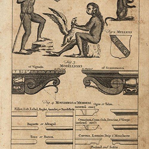 Ape like man Orangutan Monkeys 1754 Thomas Jefferys old curious engraved print