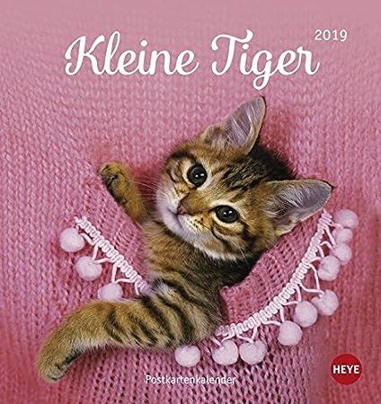 Heye pequeñas Tiger Gatos Postal Mes Calendario Calendario 2019 2157