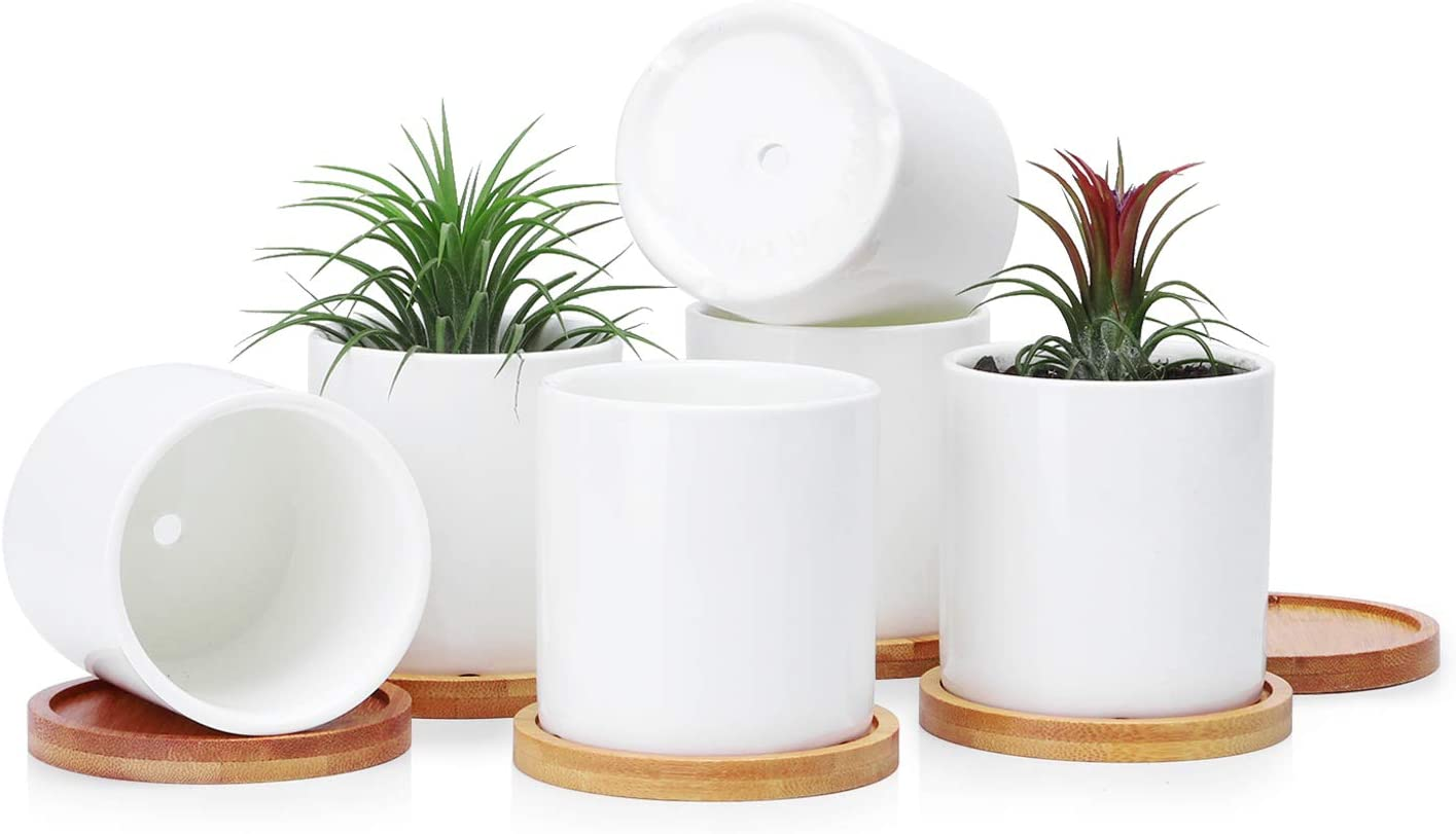Greenaholics Succulent Plant Pots - 3 Inch Ceramic Cylindrical Containers, Small Cactus Planters, Flower Pots with Drainage Hole, Bamboo Tray, Set of 6, White