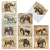 M9636OCB Trunk Mail: 10 Assorted Blank All-Occasion Note Cards Featuring Images Of Elephants On An Antique Map Background, w/White Envelopes.
