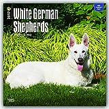 German Shepherds, White 2017 Square (Multilingual Edition)