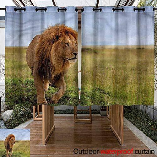- Sunnyhome Curtains for Living Room Lion Animal on Masai Mara Kenya Simple Stylish W 63