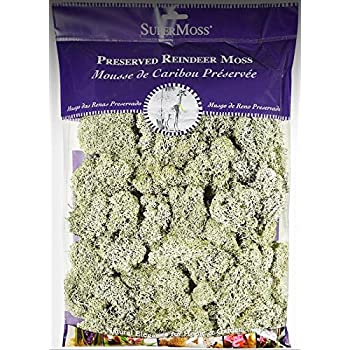 Amazon Com Miniature Dollhouse Fairy Garden Reindeer Moss 2 Oz