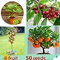 Windowsill Bonsai Citrus Actinidia Deliciosa Mixed Fruit Seeds Indoor Ornamental 50 Pack