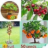 ThinIce Windowsill Bonsai Citrus Actinidia Deliciosa Mixed Fruit Seeds Indoor Ornamental Fruits