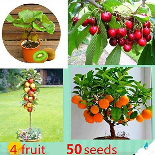 Ornamental Trees Fruit - Windowsill Bonsai Citrus Actinidia Deliciosa Mixed Fruit Seeds Indoor Ornamental 50 Pack