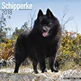 Schipperke Calendar 2018 - Dog Breed Calendar - Premium Wall Calendar 2017-2018