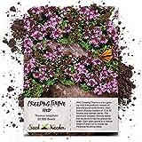 Seed Needs, Wild Creeping Thyme (Thymus serpyllum) 20,000 Seeds
