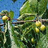 Green Anti Bird Protection Net Mesh Garden Plant