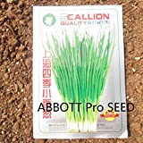 Chinese Shanghai Scallion Vegetable Seed Meticulous Selection of Fine Varieties Disease Resistance Easy Plants ABBOTT