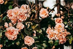 N/W Puzzle Jigsaw Rompecabezas De 1000 Piezas Hobbit - Shallow Focus Photo of Orange Roses - Hobby Decoración del Hogar Bricolaje