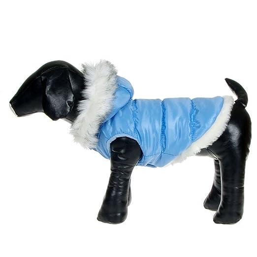 La vogue Chaqueta Acolchada Abrigo Para Perro Con Capucha Piel (Azul, XS): Amazon.es: Productos para mascotas