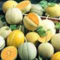 25+ ORGANICALLY GROWN Melon Sweet Summer Mix Cantaloupe Melon Seeds, Heirloom NON-GMO, Orange & Green Flesh Honeydew, Hearts of Gold, From USA